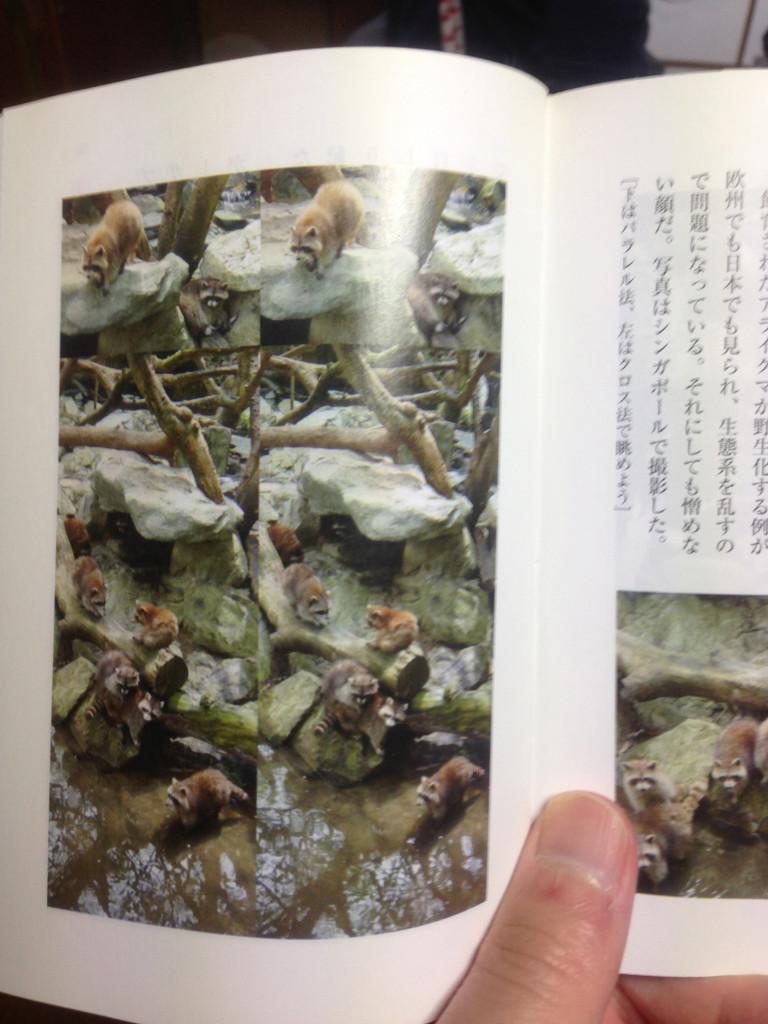 立体視訓練の「3D写真で目がどんどん良くなる本」で視力回復できるか試してみた